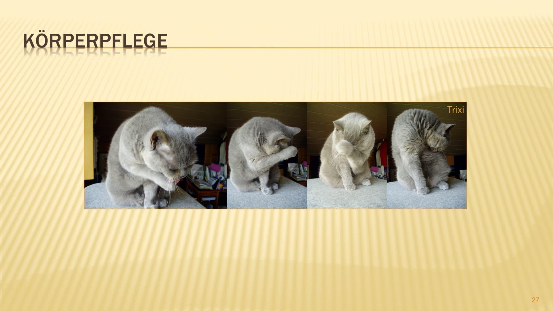 katze wedelt beim streicheln